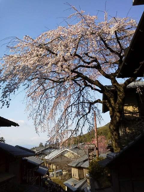 京都に来ています♪