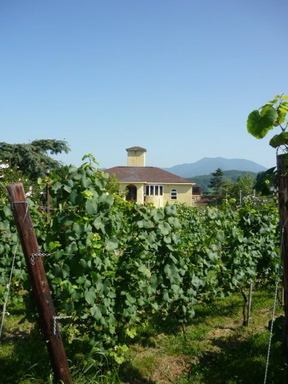 Winerytate